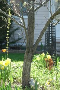 A Spring Divide