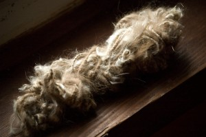 Dog Milkweed Yarn