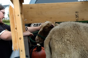Packing up the Sheep