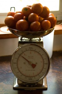 Tomato Weigh In 1